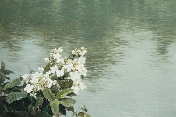 水辺(ヤマウツギ)