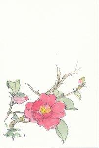 さざんか(山茶花) 1