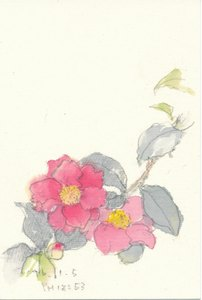 さざんか(山茶花) 2